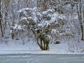 winter-elkeringhausen08