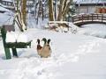 winter-elkeringhausen14